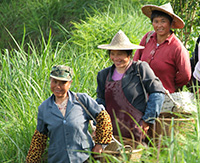 Wuyi_Pickers_200_x_163_Cropped_Web